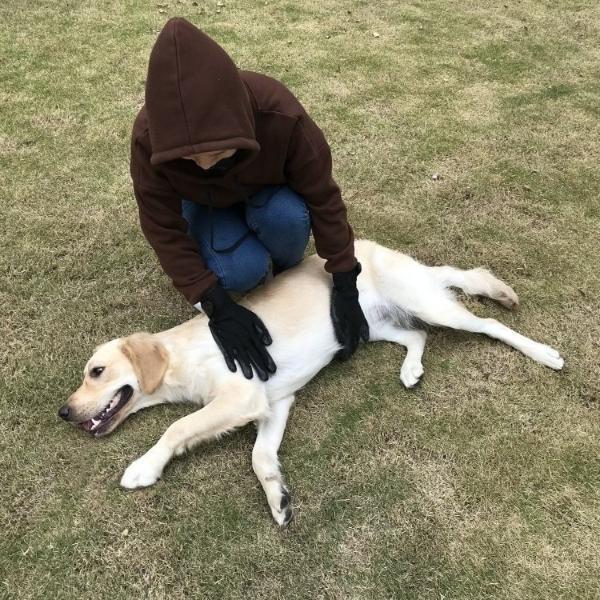 rukavica za ćešljanje pasa