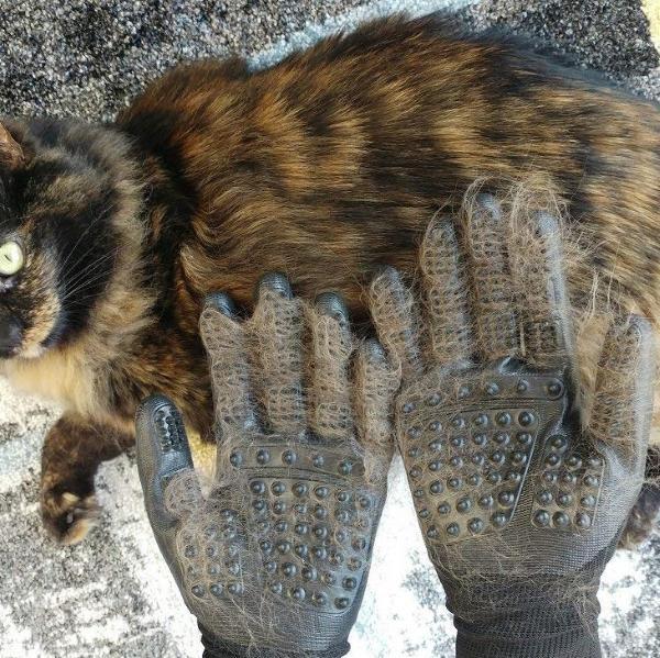 rukavica za ćešljanje mačaka