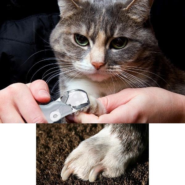 kliješta za nokte za mačaka